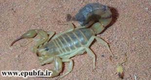 Iran-scorpion-epubfa.ir-59