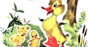 داستان مصور کودکان -جوجه اردک کوچولوی بامزه و کتاب کودکان در سایت ایپابفا (9)