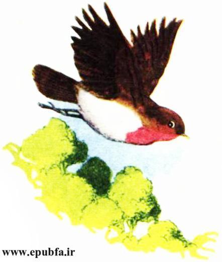 کتاب داستان مصور قدیمی جو پستچی پرنده سینه سرخ برای کودکان ایپابفا (7).jpg