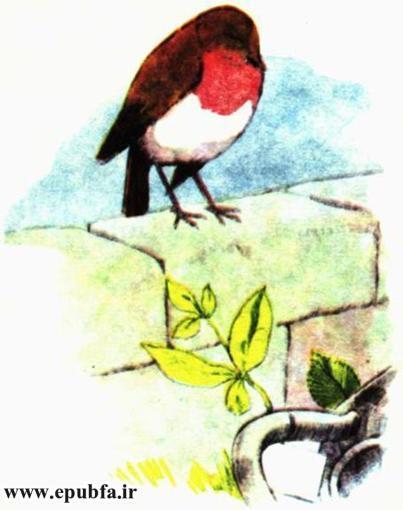 کتاب داستان مصور قدیمی جو پستچی پرنده سینه سرخ برای کودکان ایپابفا (10).jpg