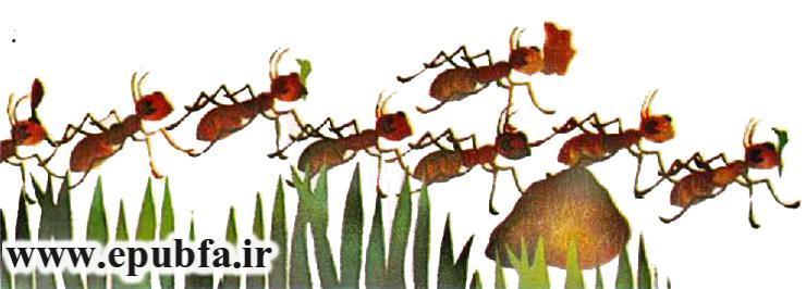 قصه مصری -مورچه ها را چو بود اتحاد- از مجموعه قصه بیایید با هم زندگی کنیم-سایت ایپابفا