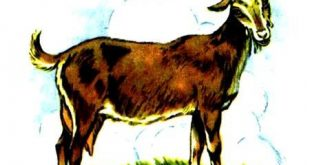 بزی به نام امیلی-مجموعه قصه های مزرعه توت جنگلی-قصه تصویری کودکان-epubfaایپابفا (2)