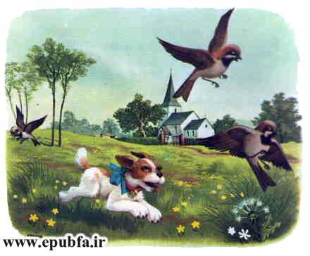 پاپی -کتاب تصویری کودکانه سگ بامزه در مزرعه حیوانات-epubfa-ایپابفا (4).jpg