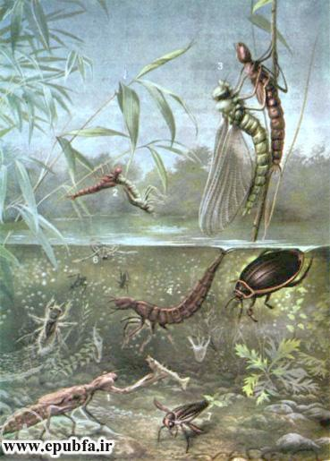 جانی و سوفی در کنار رودخانه-داستان تصویری کودکان-کتاب قصه قدیمی کودکان- ایپابفا (11).jpg