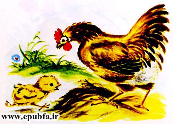 جوجه کوچولو و سیب سرخ-کتاب قصه تصویری کودکان-داستان کودکانه ایپابفا (6).jpg