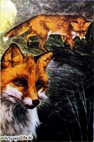 کتاب قصه روباه و خروس برای کودکان و خردسالان ایپابفا3