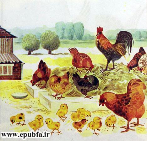 کتاب قصه کودکانه شکست باز-ارشیو قصه و داستان ایپابفا-مرغ و خروس ها