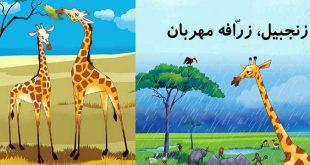 جلد قصه کودکانه زنجبیل زرافه مهربان