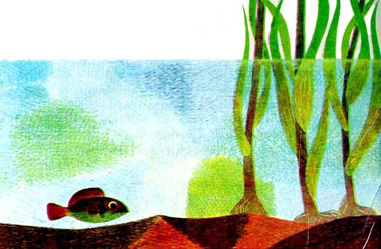 بچه ماهی در حال شنا در میان علف های کف برکه آب - قصه کودکانه ایپابفا