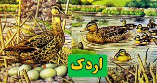 داستان-کودکانه-اردک-زندگی-اردک-های-وحشی