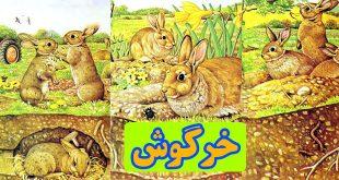 قصه-کودک-خرگوش-اشنایی-کودکان-با-زندگی-خرگوش-ها