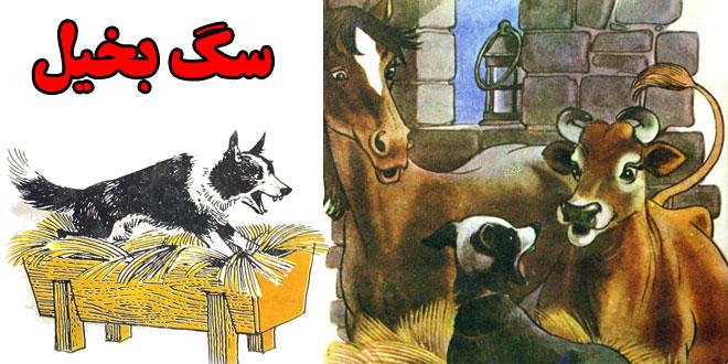 افسانه-ازوپ-سگ-بخیل