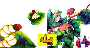 قصه کودکانه پیله کرم ابریشم (12)